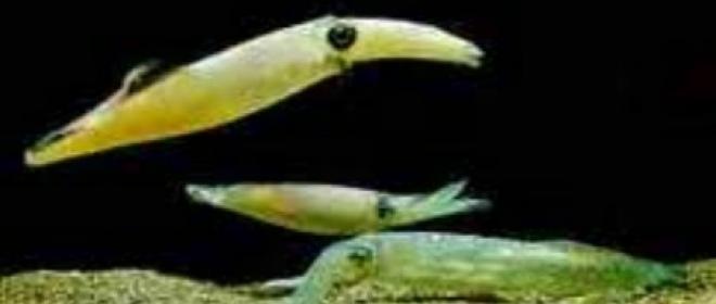 Shattle: un Calamaro nello Spazio