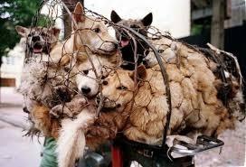 In Cina il Festival della carne di cane. Tre animalisti salvano trenta cani