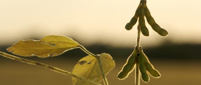 Esotismo e alimentazione: il mito della soia